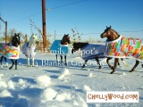 #Breyer #ModelHorse Handmade #Horse Blanket Giveaway @ChellyWood.com